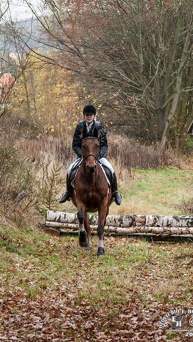 HP Pferd 3 h1000