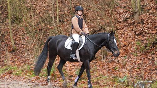 HP Pferd w1000