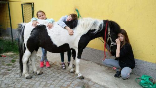 Pferde 6 w1000