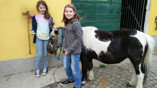 Pferde 7 w1000