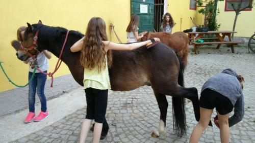 Pferde 8 w1000